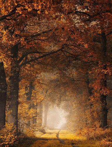 Framed autumn van Rob Visser