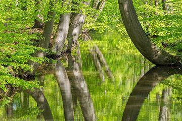 Frühling mit gebogenen Baumstämmen im holländischen Wald und Reflexion im Wasser von Ben Schonewille
