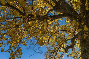 Autumn tree van