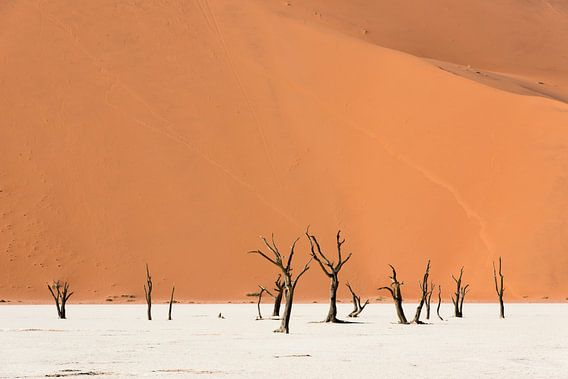 Namibië, deadvlei van Jeannette Kliebisch