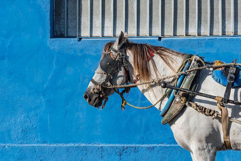 Paard in Trinidad van Celina Dorrestein