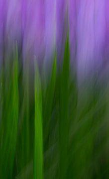 Wer hat Angst vor Grün und Lila? von Be-eR fotografeert