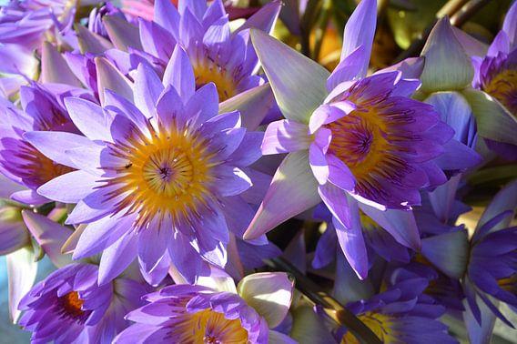 Lotusbloemen van Michael Feelders