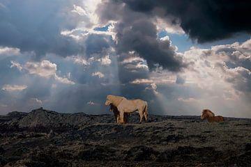 IJsland von Gert Hilbink