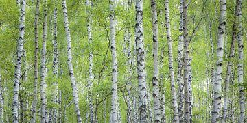 grün-weiß-gestreift von Daniela Beyer