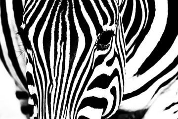 Zebra van Angelika Stern