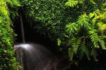 Verborgener Wasserfall van Thomas Herzog