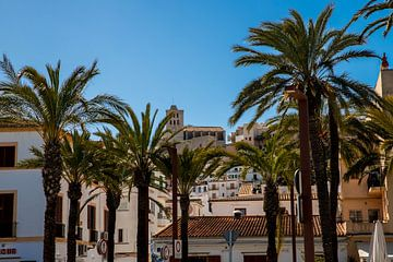 Palmbomen voor de kathedraal van Ibiza van Alexander Wolff
