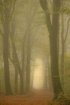 Pad door de magische ochtendnevel bos met zonlicht in de verte van Sjoerd van der Wal