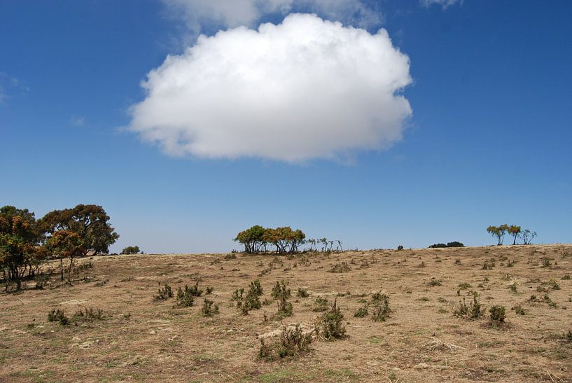 Een Wolkje boven Ethiopië van Eelkje Colmjon
