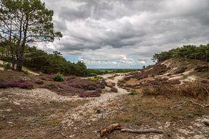 Schoorlse duinen van