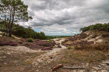 Schoorlse duinen von FotovanHenk