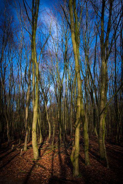 Bruin, Groen en Blauw van Alex Hiemstra