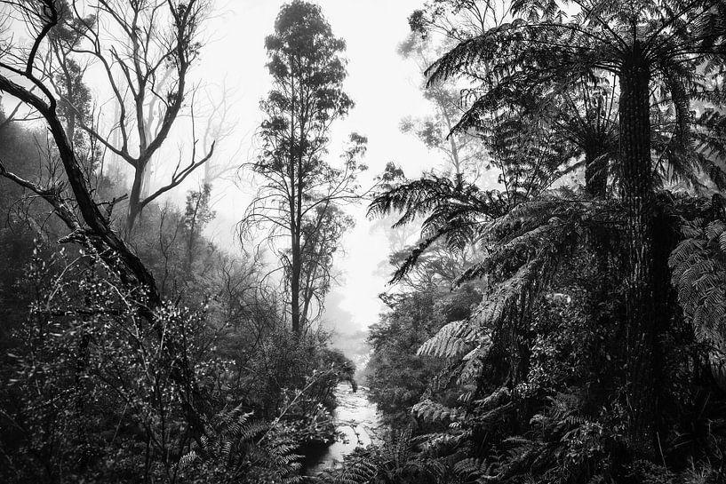 Regenwald im Nebel X von Ines van Megen-Thijssen