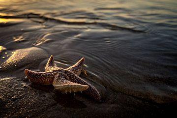 étoile de mer sur Gonnie van de Schans