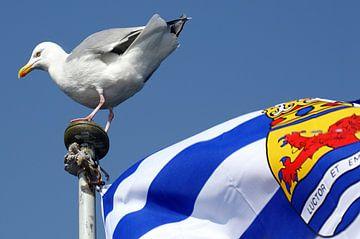 Möwe auf Zeeuwse flag von