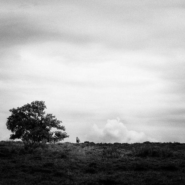 Blaricummerheide van Jeroen Berkenbosch