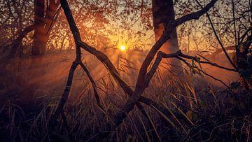 Mistig doorkijkje in het bos (Abel Tasmanpad) van Lutjegast van