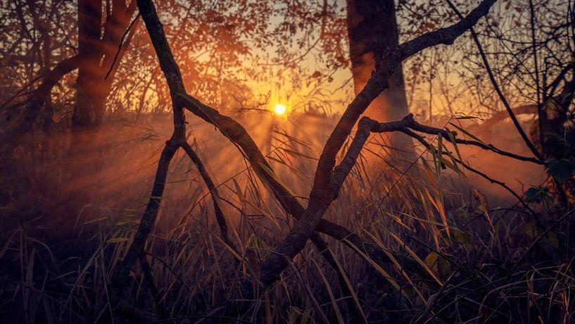 Mistig doorkijkje in het bos (Abel Tasmanpad) van Lutjegast van Martijn van Dellen