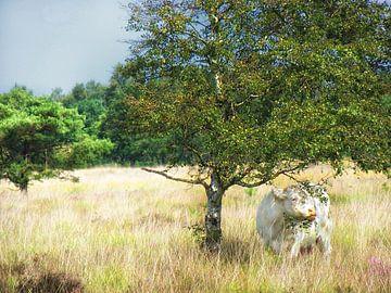 Eine Kuh auf dem Buurserzand von Jessica Berendsen