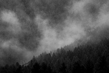 Pin brumeux sur Maarten Mensink