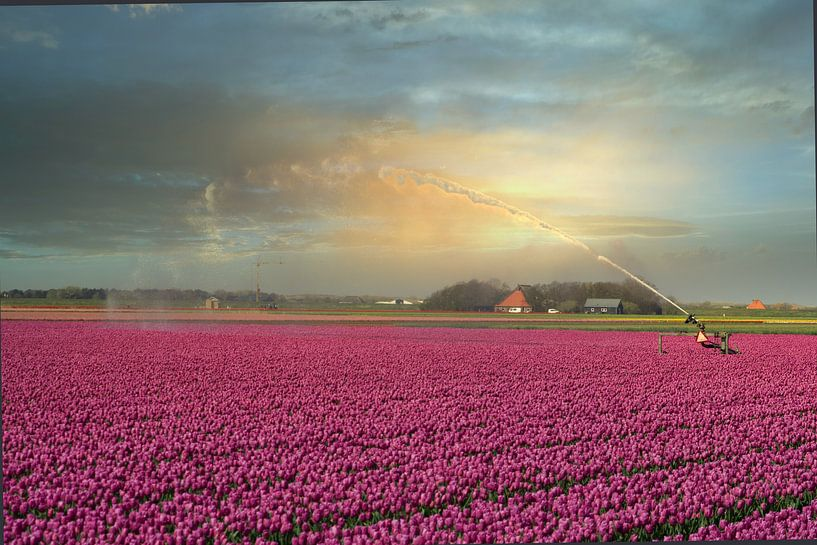 Nederlands tulpenveld van Wendy Tellier - Vastenhouw