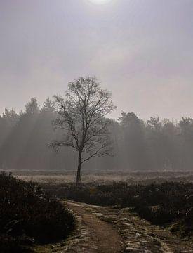 boompje onder de zonnestralen van Tania Perneel