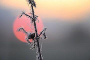 stekels voor de zon van Tania Perneel