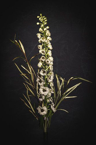 Witte bloem met takjes tegen een donkere achtergrond