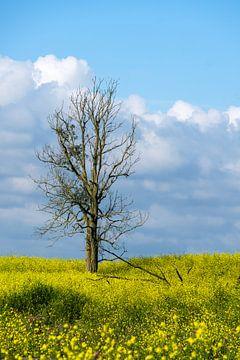 Eenzame boom van Joke Beers-Blom