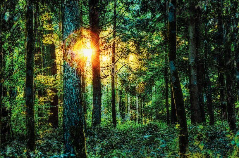 Sommerwald von Nicc Koch
