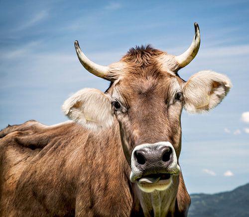 Einfach Kuh