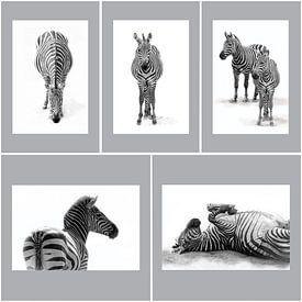Zebra's, zwart-wit (Dierenpark Emmen) van Aafke's fotografie