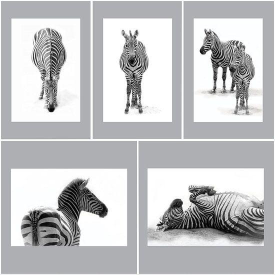Zebra's, zwart-wit (Dierenpark Emmen)