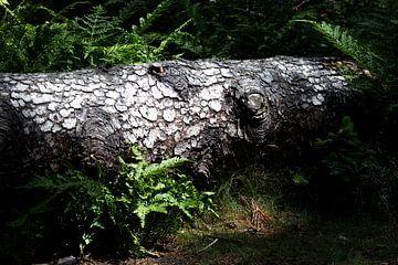 In der Natur gefällt von Andrew van der Beek