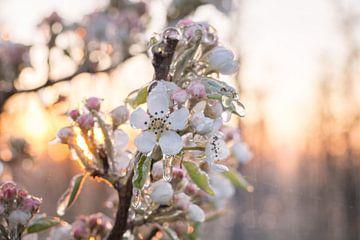 Gefrorene Blüte von Max ter Burg Fotografie