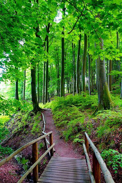 Im Nationalpark von Ostsee Bilder