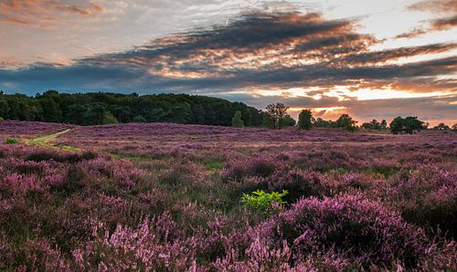 Heide bij zonsondergang
