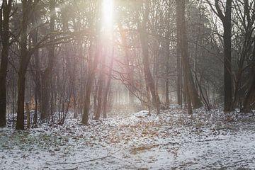 Schnee im Wald von Miranda Geerts