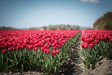 Tulpen sur Marco Bakker