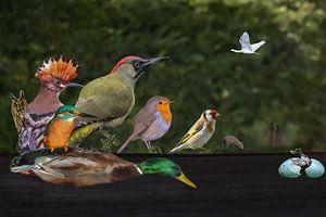 Tuin der Lusten / Garden of Earthly delights van Henk de Boer