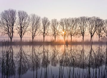 Auswahl von Bäumen im Amstel mit aufgehender Sonne und Nebel von Koen Boelrijk Photography