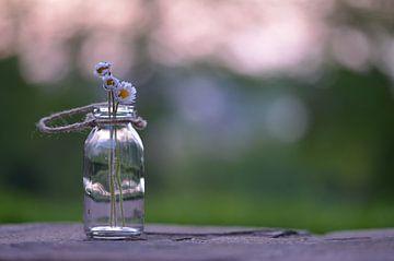 Gänseblümchen im Glas van zwergl 0611