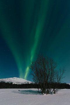 Nordlicht am Nachthimmel über der Insel Senja in Nordnorwegen von Sjoerd van der Wal