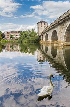 Zwaan zwemt bij de oude brug over de Lahn in Limburg van Marc Venema