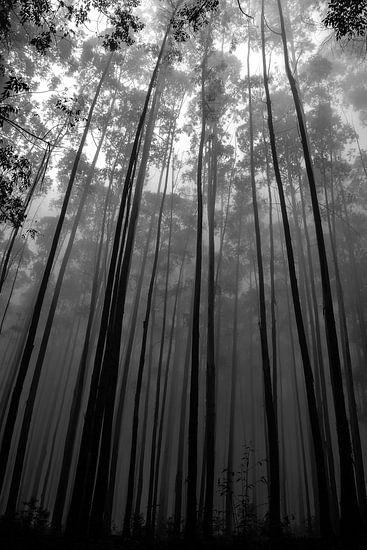 Hoge bomen von Jelle  Beuzekom