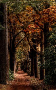 Herfst laantje van Renso Profijt