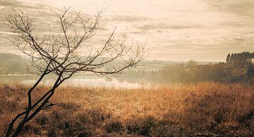Atmosphärische Landschaft von Kitty Stevens