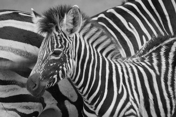 Zebra von Carla Mesken-Dijkhoff