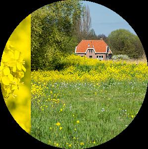 Landschap met koolzaad van Kok and Kok
